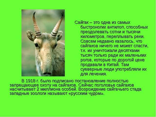 Сайгак – это одна из самых быстроногих антилоп, способных преодолевать сотни...