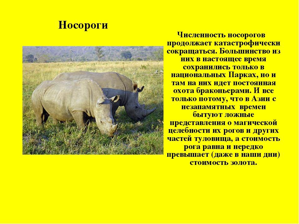 Численность носорогов продолжает катастрофически сокращаться. Большинство из...