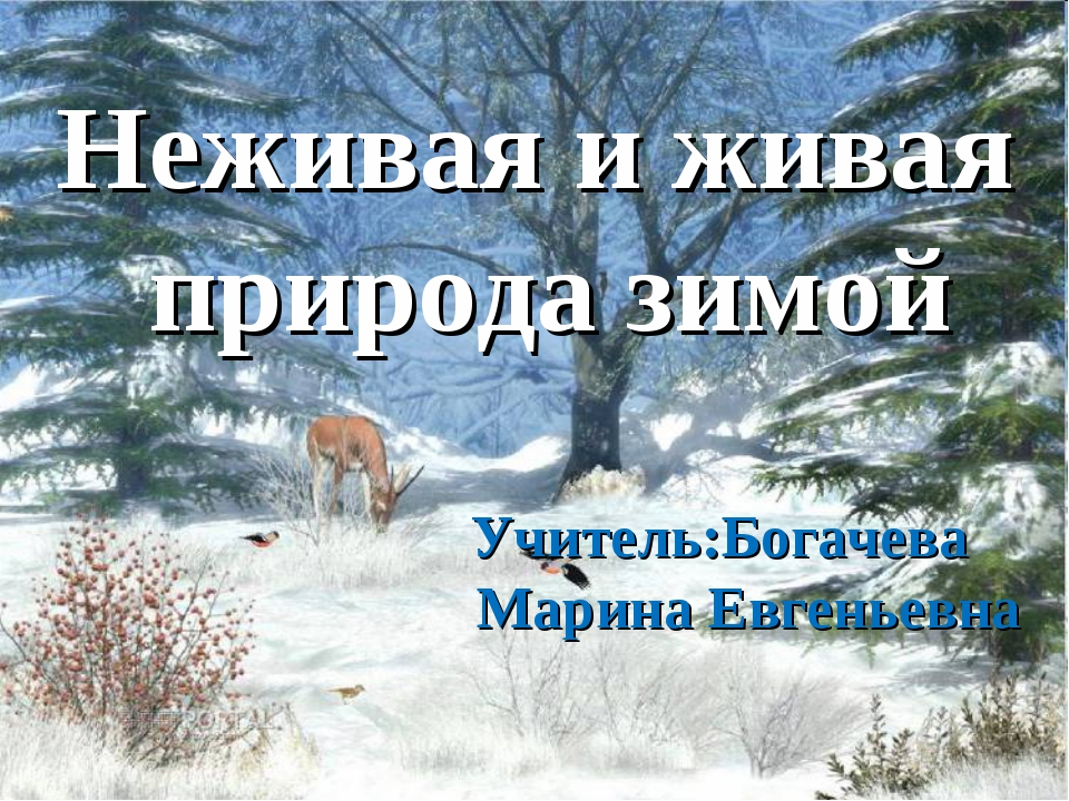 Неживая и живая природа зимой Учитель:Богачева Марина Евгеньевна