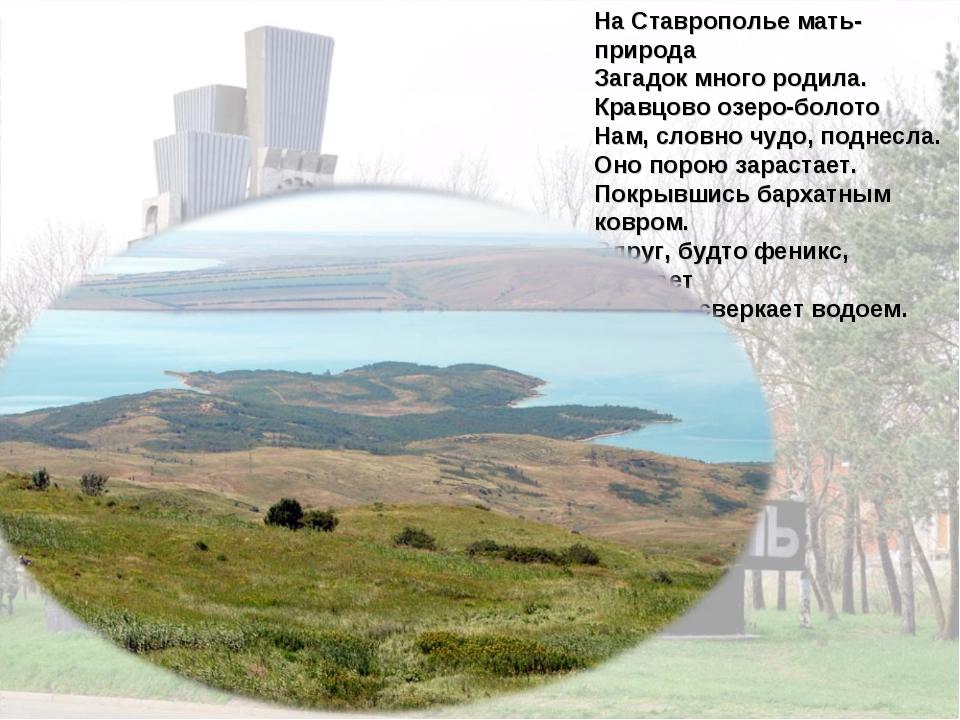 На Ставрополье мать-природа Загадок много родила. Кравцово озеро-болото Нам,...