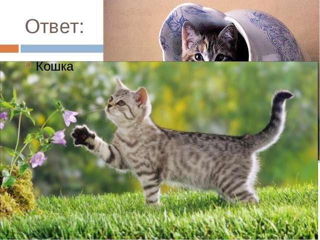 Ответ: Кошка