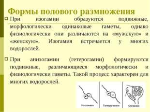 При изогамии образуются подвижные, морфологически одинаковые гаметы, однако ф