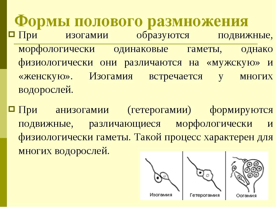 При изогамии образуются подвижные, морфологически одинаковые гаметы, однако ф...
