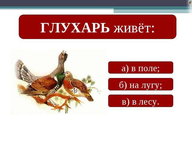 ГЛУХАРЬ живёт: а) в поле; б) на лугу; в) в лесу. Лазарева Лидия Андреевна, уч...