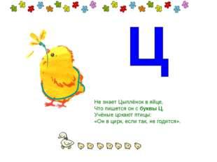 Не знает Цыплёнок в яйце, Что пишется он сбуквы Ц. Учёные цокают птицы: «Он