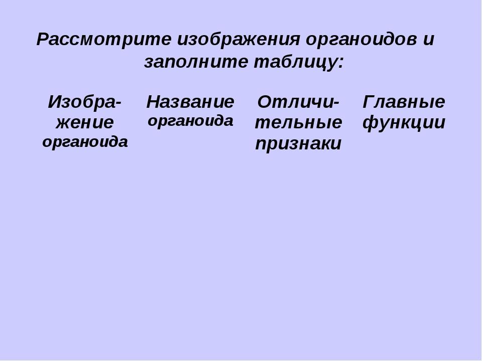 Рассмотрите изображения органоидов и заполните таблицу: