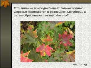 Это явление природы бывает только осенью. Деревья наряжаются в разноцветные у