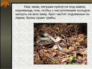 Ужи, змеи, лягушки прячутся под камни, корневища, пни, чтобы с наступлением