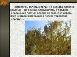 Появились золотые пряди на берёзах, багряно- красные - на осинах, закружилис