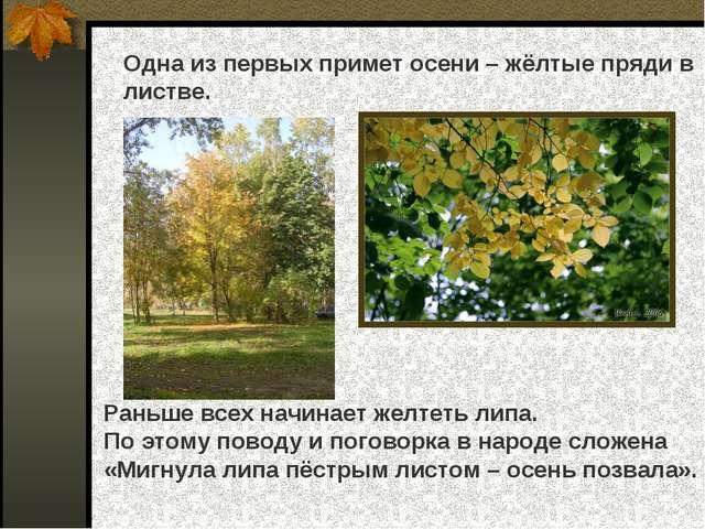 Одна из первых примет осени – жёлтые пряди в листве. Раньше всех начинает жел...
