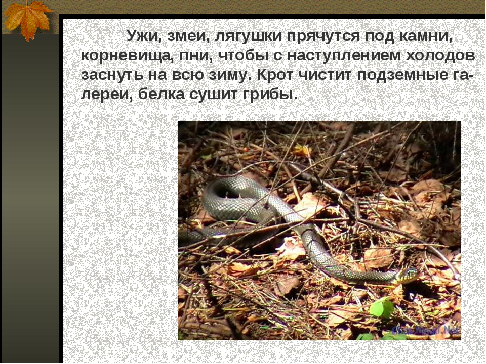Ужи, змеи, лягушки прячутся под камни, корневища, пни, чтобы с наступлением...