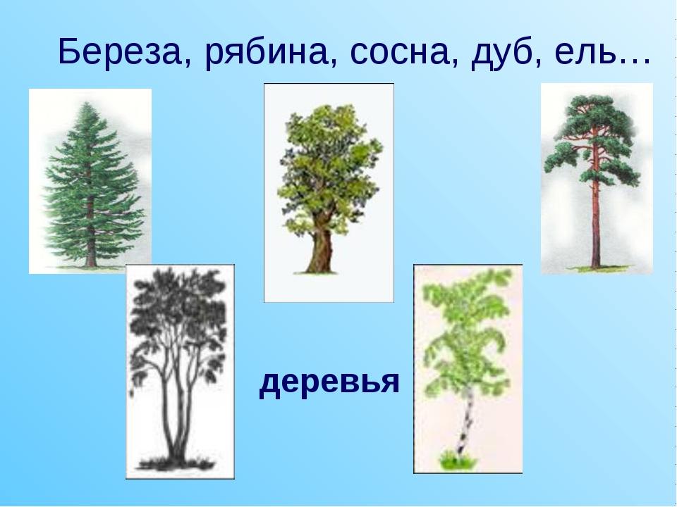 Береза, рябина, сосна, дуб, ель… деревья