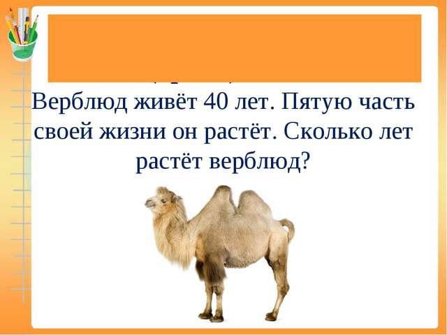 Задачи на нахождение доли (дроби) от числа Верблюд живёт 40 лет. Пятую часть...