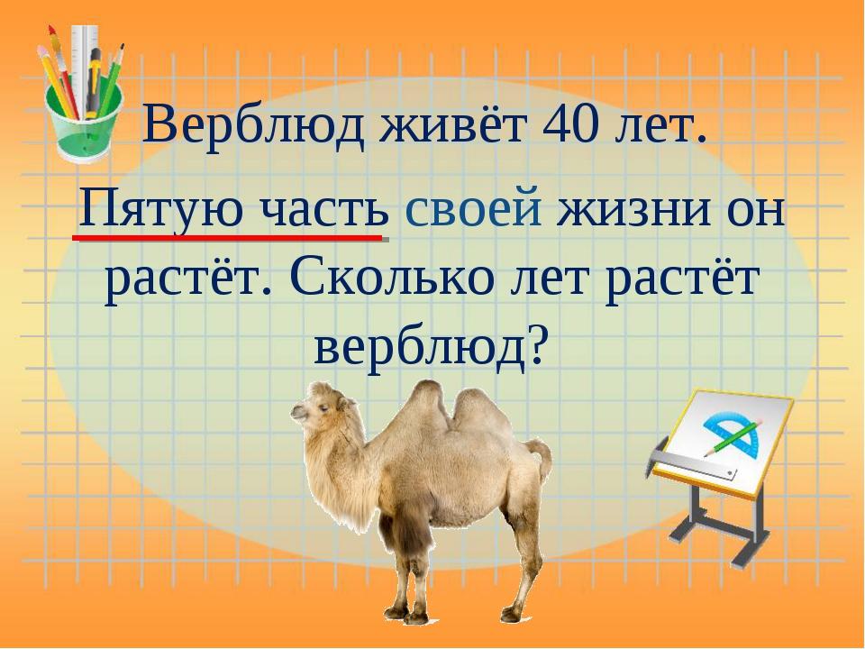 Верблюд живёт 40 лет. Пятую часть своей жизни он растёт. Сколько лет растёт в...