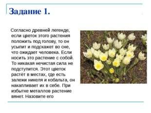 Задание 1. Согласно древней легенде, если цветок этого растения положить под