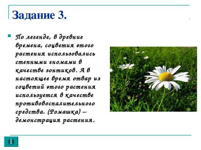 Задание 3. По легенде, в древние времена, соцветия этого растения использовал...