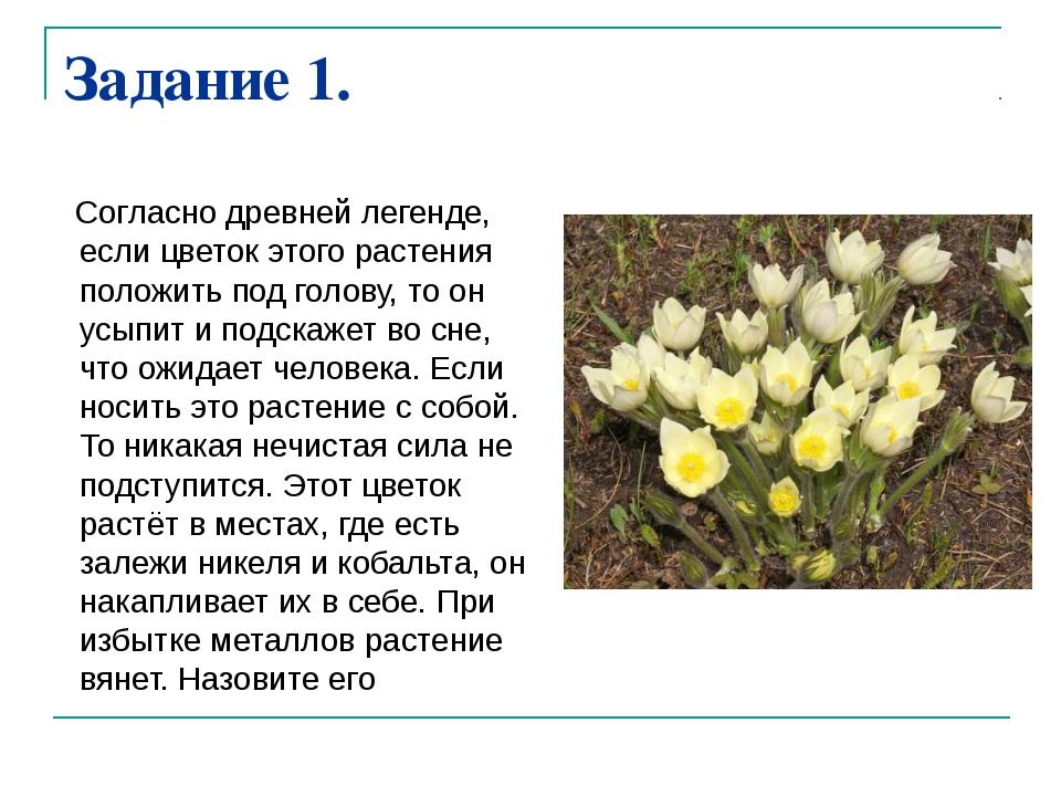 Задание 1. Согласно древней легенде, если цветок этого растения положить под...