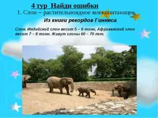 1. Слон – растительноядное млекопитающее. Из книги рекордов Гиннеса Слон. Ин