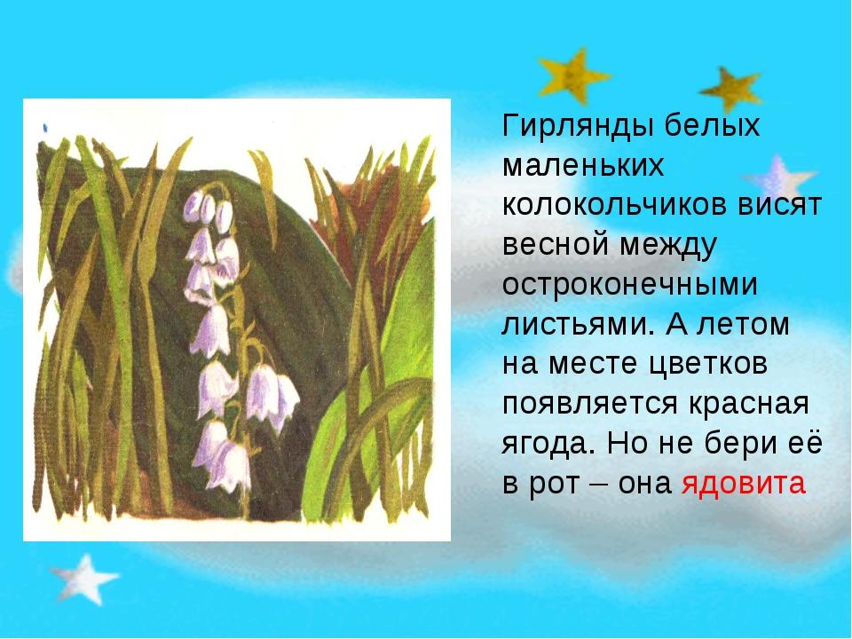 Гирлянды белых маленьких колокольчиков висят весной между остроконечными лист...