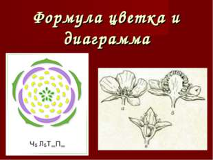 Формула цветка и диаграмма