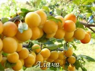 Алыча