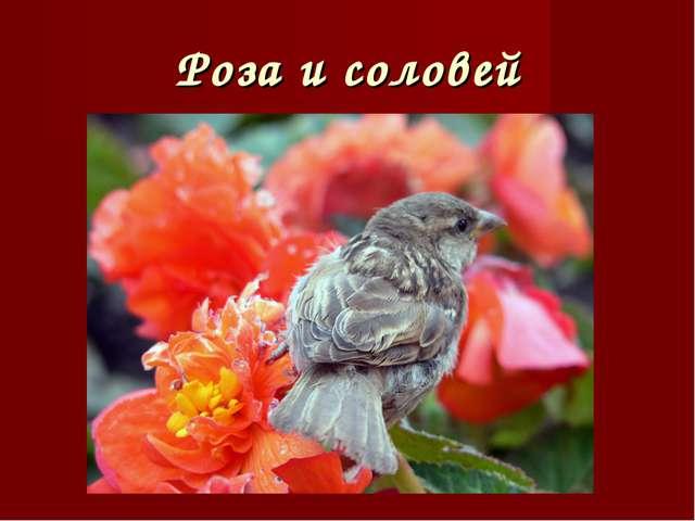 Роза и соловей