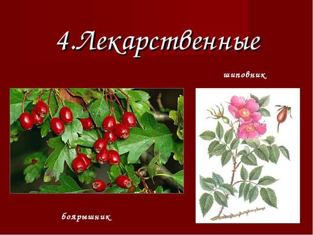 4.Лекарственные боярышник шиповник