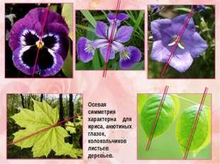 Осевая симметрия характерна для ириса, анютиных глазок, колокольчиков листьев