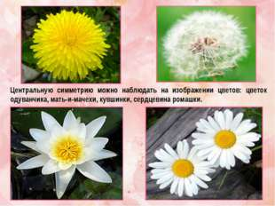 Центральную симметрию можно наблюдать на изображении цветов: цветок одуванчик