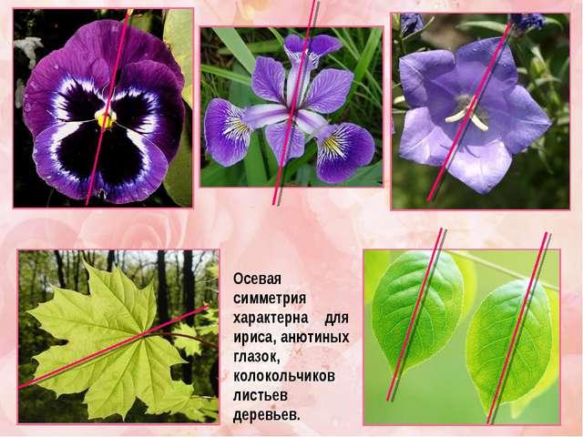 Осевая симметрия характерна для ириса, анютиных глазок, колокольчиков листьев...