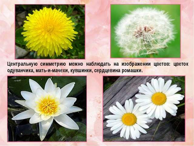 Центральную симметрию можно наблюдать на изображении цветов: цветок одуванчик...