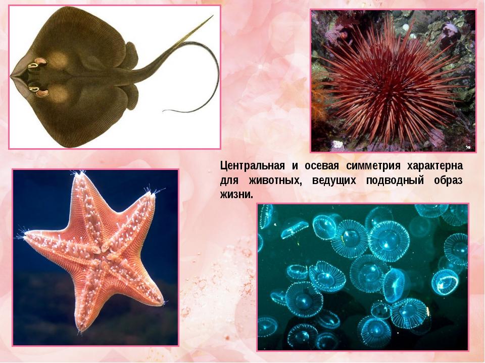 Центральная и осевая симметрия характерна для животных, ведущих подводный обр...