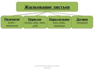 учитель биологии Деулина Ирина Юрьевна учитель биологии Деулина Ирина Юрьевна