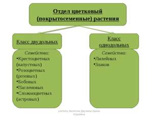 Отдел цветковый (покрытосеменные) растения Класс двудольных Класс однодольных