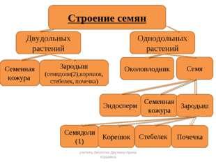 Семя учитель биологии Деулина Ирина Юрьевна учитель биологии Деулина Ирина Юр
