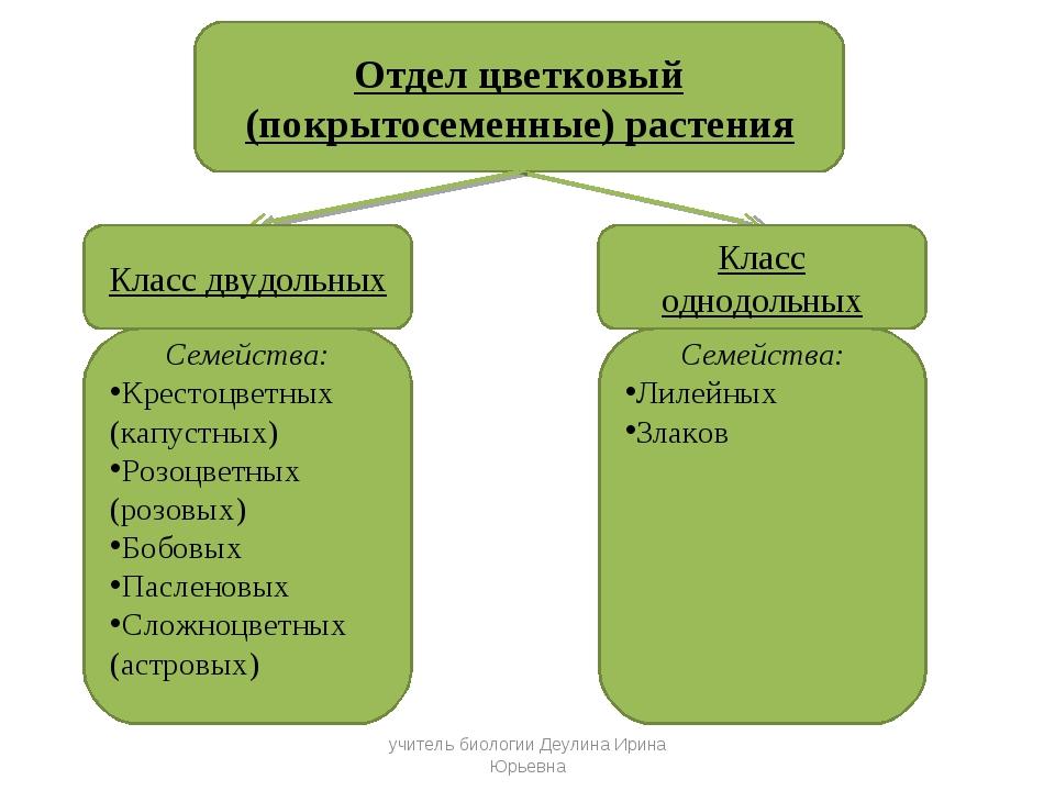 Отдел цветковый (покрытосеменные) растения Класс двудольных Класс однодольных...