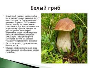 Белый гриб считают царём грибов из-за внушительных размеров, вкусу и питатель