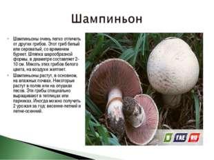 Шампиньоны очень легко отличить от других грибов. Этот гриб белый или сероват