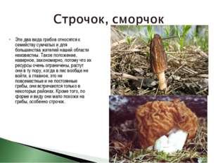 Эти два вида грибов относятся к семейству сумчатых и для большинства жителей
