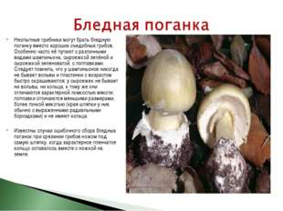 Неопытные грибники могут брать бледную поганку вместо хороших съедобных грибо