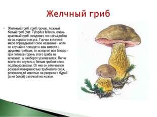 Желчный гриб, гриб горчак, ложный белый гриб (лат. Tylopilus felleus), очень
