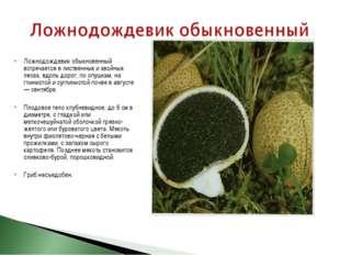 Ложнодождевик обыкновенный встречается в лиственных и хвойных лесах, вдоль до