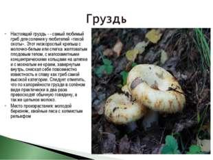 Настоящий груздь - - самый любимый гриб для соления у любителей «тихой охоты»
