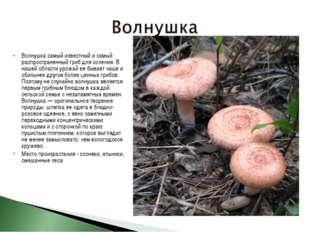 Волнушка самый известный и самый распространенный гриб для соления. В нашей о