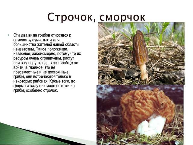 Эти два вида грибов относятся к семейству сумчатых и для большинства жителей...