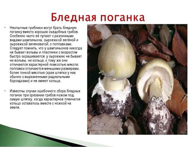 Неопытные грибники могут брать бледную поганку вместо хороших съедобных грибо...