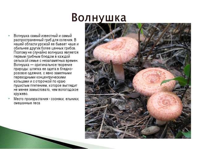 Волнушка самый известный и самый распространенный гриб для соления. В нашей о...