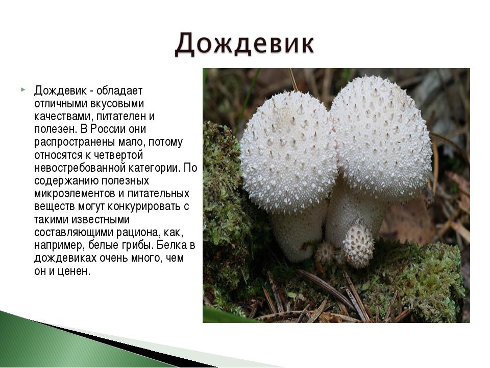 Дождевик - обладает отличными вкусовыми качествами, питателен и полезен. В Ро...