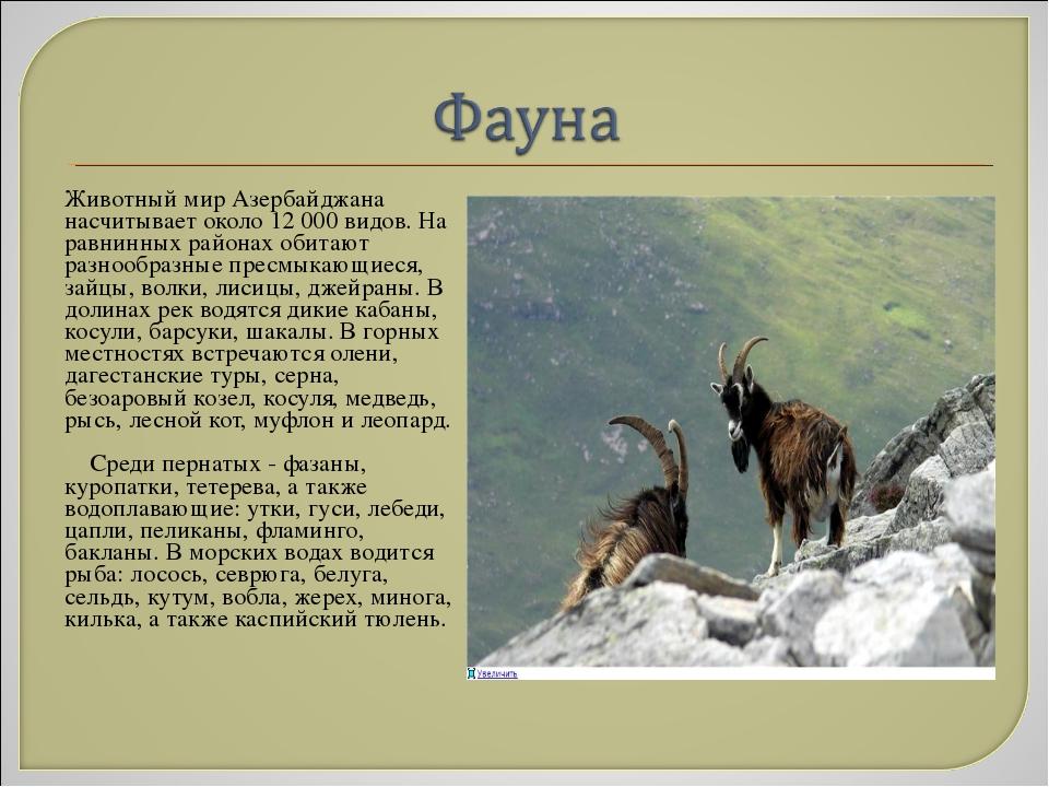Животный мир Азербайджана насчитывает около 12 000 видов. На равнинных рай...