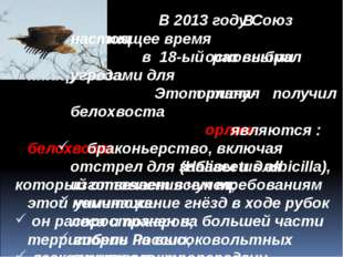 В 2013 году Союз охраны птиц в 18-ый раз выбрал птицу года. Этот титул получ